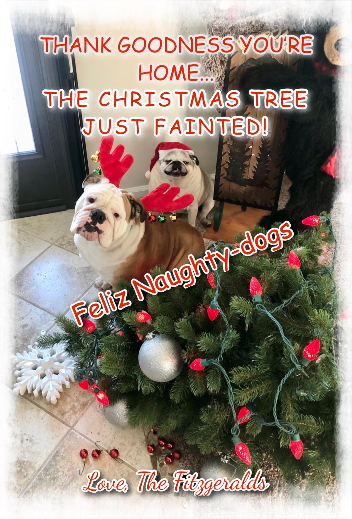 feliz naughty dogs
